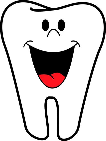 Las partes del diente  Clinica Dental Santa Clara Clinica Dental