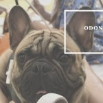 Odontopediatría asistida con perros